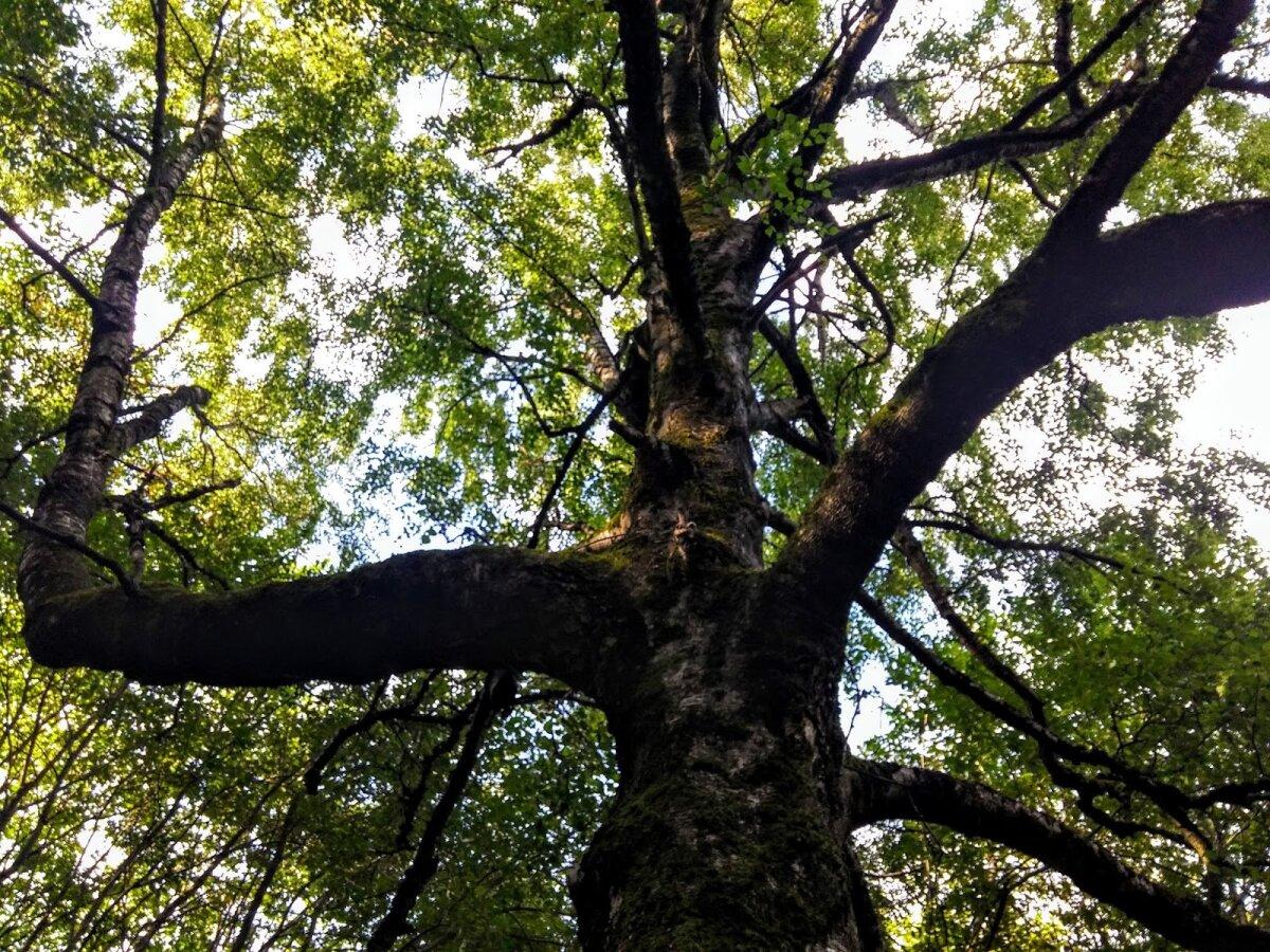 Vienas iš parko medžių