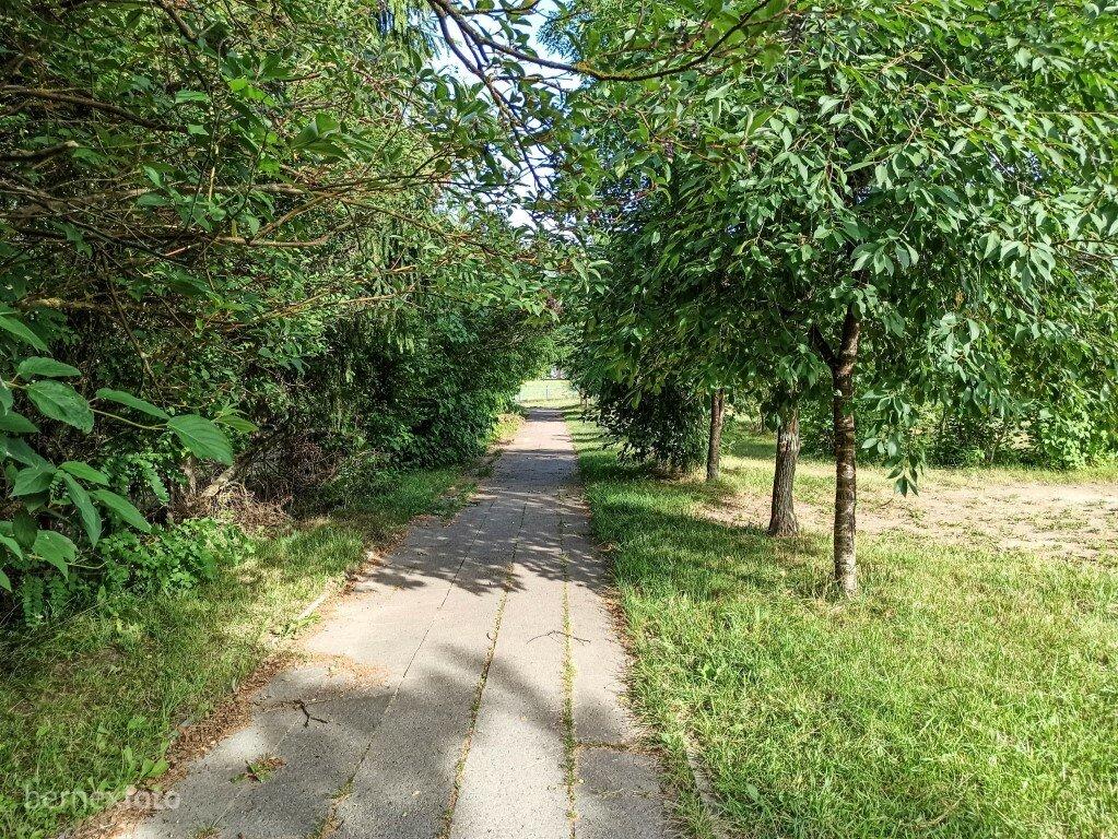 Tankiai medžiais ir krūmais apaugęs takas